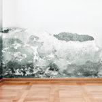 mold removal cincinnati, mold removal services cincinnati, mold remediation cincinnati